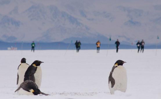 guta_pingvinek.jpg
